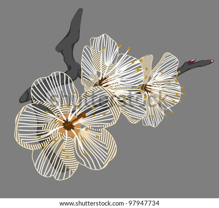 white flower on a branch - stock vector