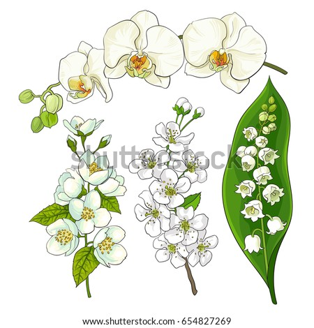 white flower set   lily of the
