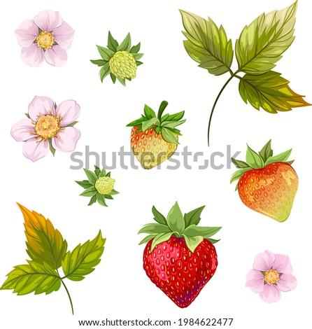 white flower. strawberries. strawberry leaf. beautiful strawberry. berry. strawberry growth, strawberry bloom