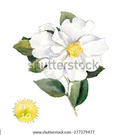 white flower vector watercolor