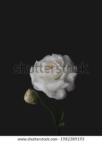 white flower with black