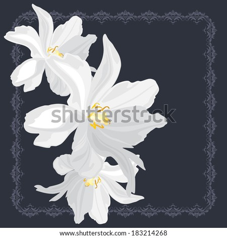 stock-vector-white-flowers-on-the-orname