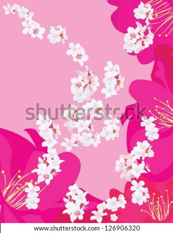 white flowers with pink and purple flowers on the pink background