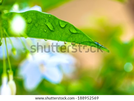 white flowers with water drops