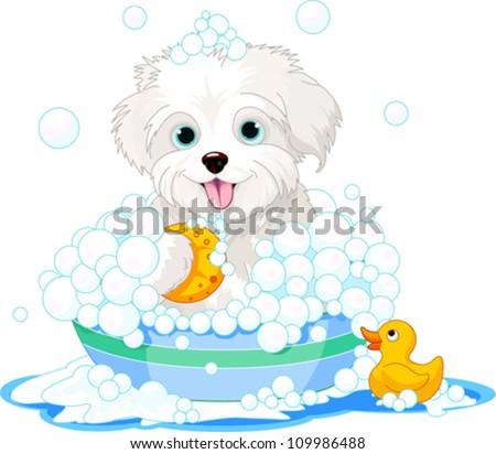 white fluffy dog having a soapy