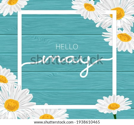 White frame on blue wooden background and daisy chamomile flowers illustration - Hello May. Photo stock ©
