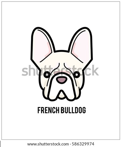 white french bulldog face