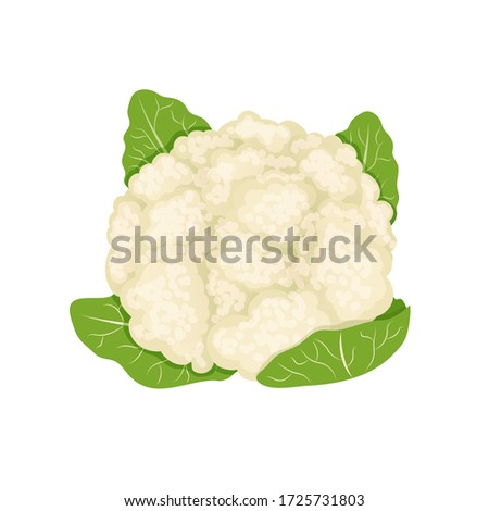 White fresh cauliflower, cabbage on white background, healthy food, vegetables vector icon. Photo stock ©