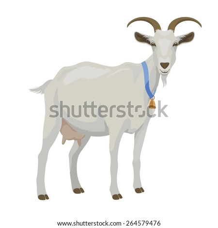 White goat with golden bell, side view, isolated