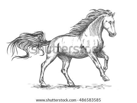 white horse running and