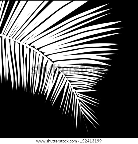 Palm Trees Background Black And White White Leaves of a Palm Tree on