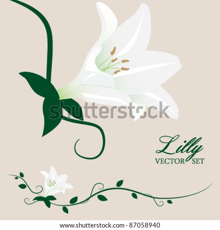 stock vector White Lilly and Vines Vector Set