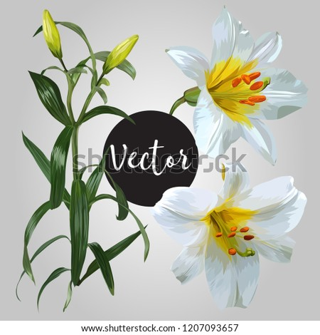 White Lily Flower Vector Design Set