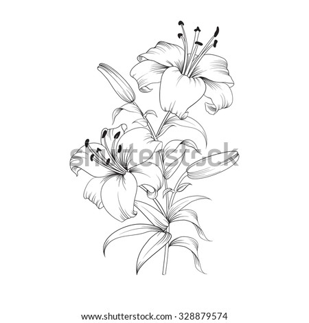 white lily isolated on a white