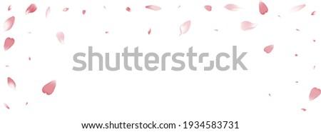 White Lotus Petal Vector White Background. Color Modern Sakura Petal Banner. Peach Petal Romantic Illustration. March Cherry Petal Congratulation.