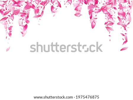 white lotus petal vector white