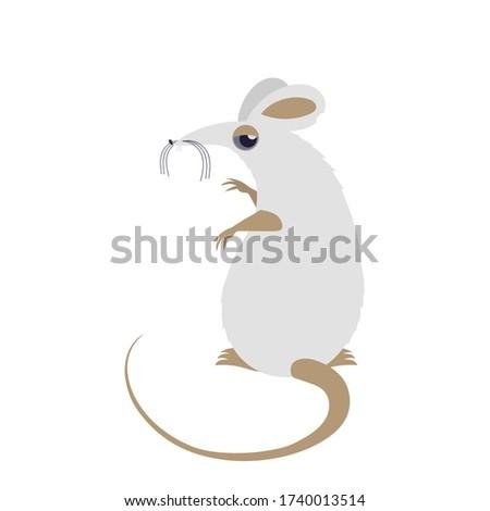white mouse funny white rat
