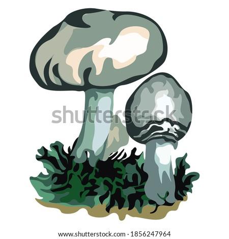white mushroom or agaricus