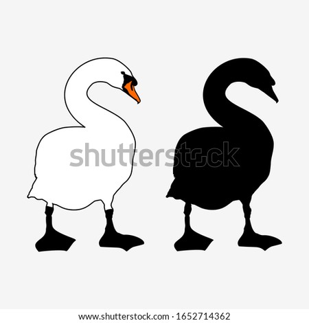 white mute swan outline and