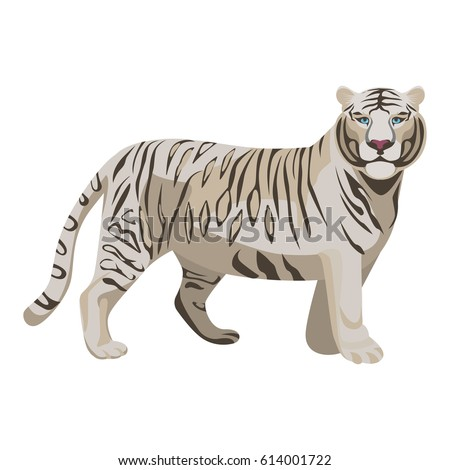 white or bleached tiger