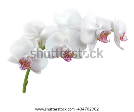 white orchid flowers. stem of...