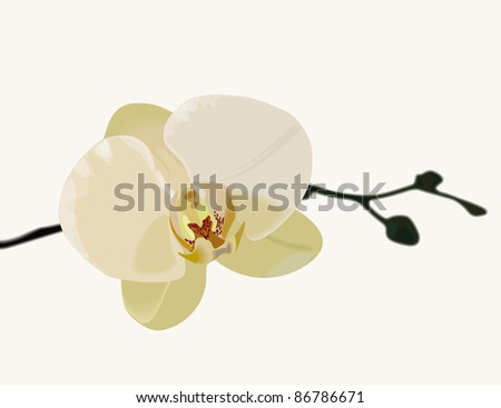 White orchid vector - stock vector