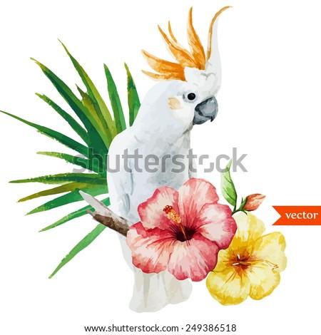 white parrot  hibiscus