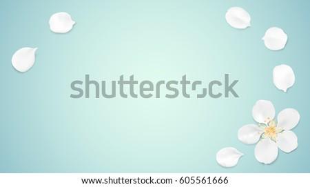 white pastel spring flower