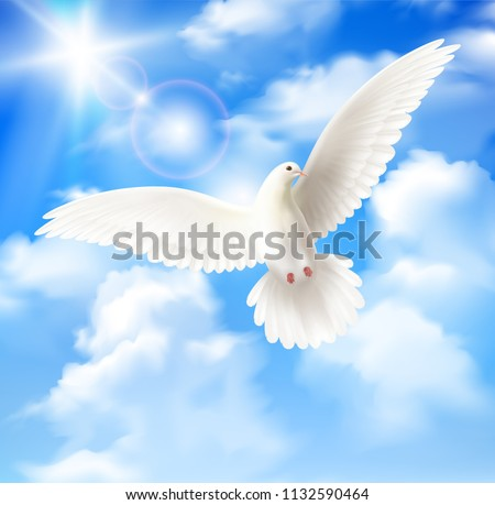 white pigeon background with
