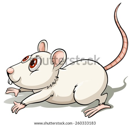 white rat in a jumping position