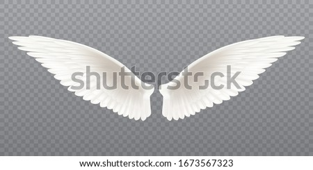 white realistic wings pair of