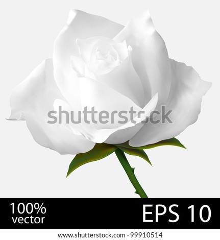 White rose flower. Photo-realistic mesh vector illustration