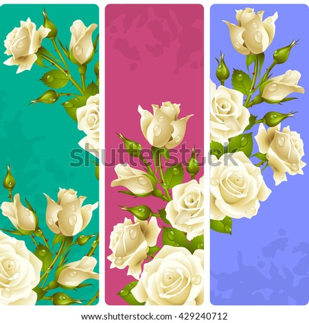 white rose frames vector set
