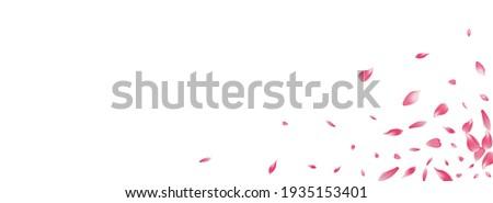 white rose petal vector
