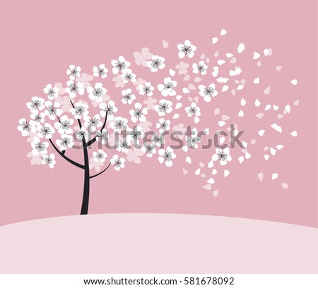white sakura tree blossom on