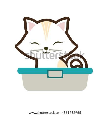 white small cat sitting stripes