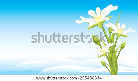 white spring flowers on a