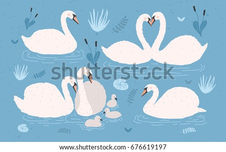 white swan collection on blue