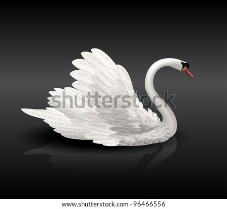 white swan on black water with