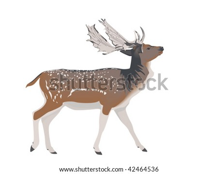 white-tailed deer stag