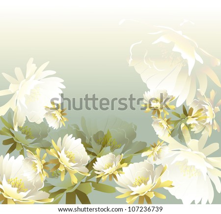 White tropical flowers