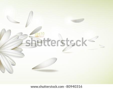 white vector flower petals