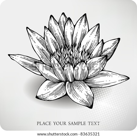 White water lily hand drawing Drawings Of Water Lilies