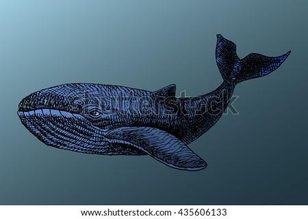 white whale under water