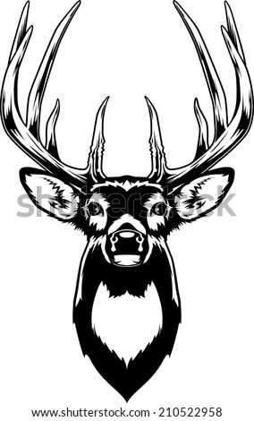 Whitetail Deer Head Vector Illustration of a Whitetail Deer Head