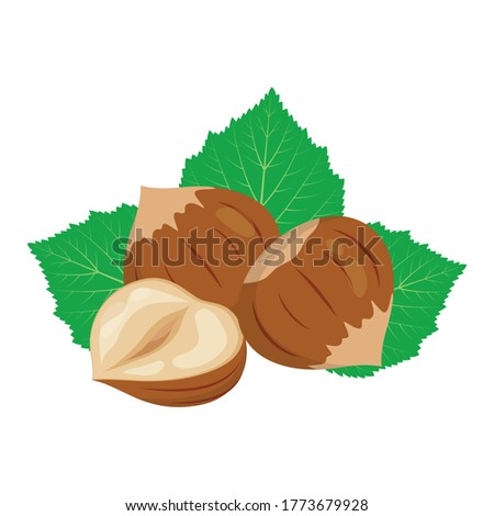 whole and half of hazelnut with leaves closeup isolated on white background, vector illustration