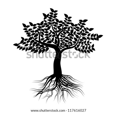Tree black and white roots