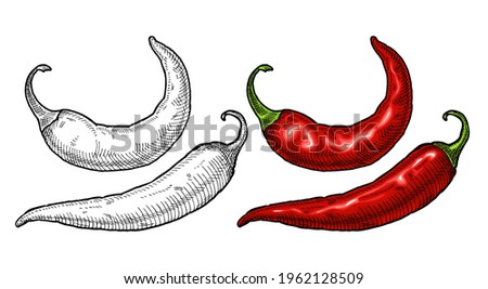 Whole pepper chilli. Vintage hatching vector color and black illustration. Isolated on white background. Hand drawn design