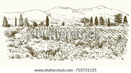 wide view of vineyard vineyard
