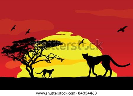 wild african animals at sunset
